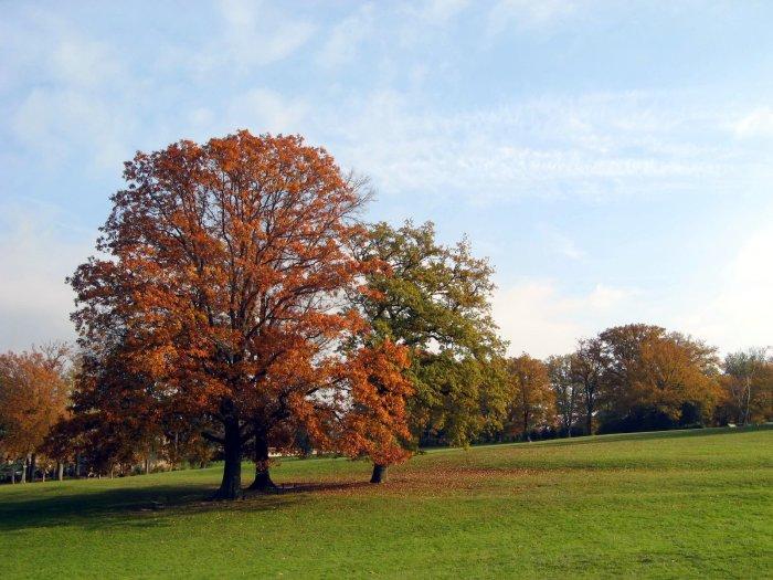 automne installer votre clôture